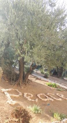 izraelis-jord-spalis2016m365
