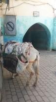 Marokas18m181